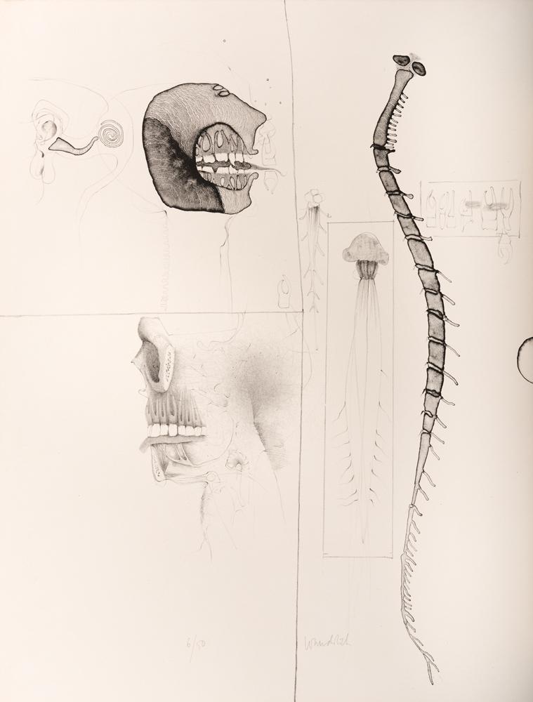 1963 | »Kleine Anatomie«, Blatt 3